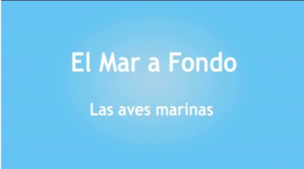 Logo-video-aves marinas